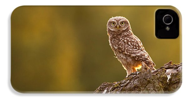 Qui, Moi? Little Owlet In Warm Light IPhone 4s Case by Roeselien Raimond