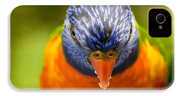 Rainbow Lorikeet IPhone 4s Case by Avalon Fine Art Photography