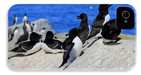 Razorbills IPhone 4s Case by John Burk