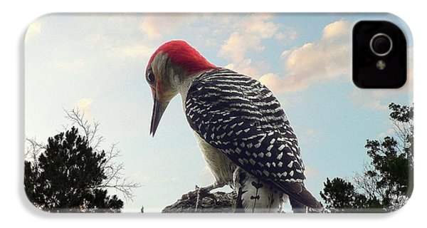 Red-bellied Woodpecker - Tree Top IPhone 4s Case by Al Powell Photography USA
