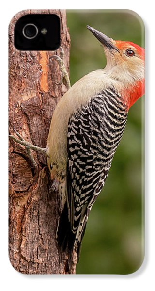 Red Bellied Woodpecker 3 IPhone 4s Case by Jim Hughes
