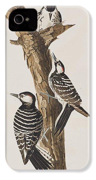 Red-cockaded Woodpecker IPhone 4s Case by John James Audubon