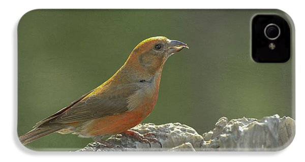 Red Crossbill IPhone 4s Case by Constance Puttkemery