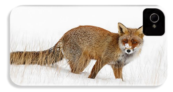 Red Fox In A Snow Covered Scene IPhone 4s Case by Roeselien Raimond