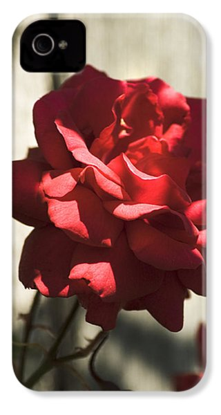 Red Rose IPhone 4s Case by Yulia Kazansky
