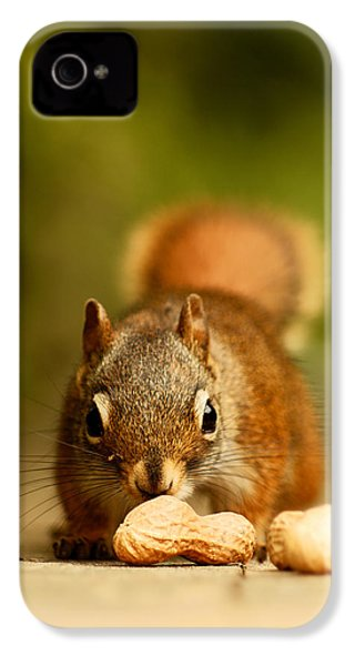 Red Squirrel   IPhone 4s Case by Cale Best