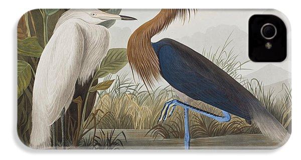 Reddish Egret IPhone 4s Case by John James Audubon