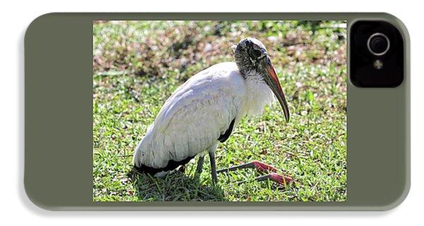 Resting Wood Stork IPhone 4s Case by Carol Groenen