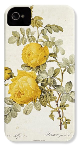 Rosa Sulfurea IPhone 4s Case by Pierre Redoute