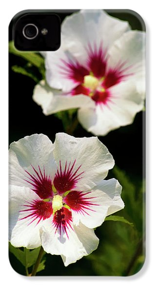 IPhone 4s Case featuring the photograph Rose Of Sharon by Christina Rollo