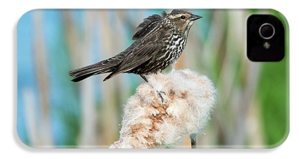 Ruffled Feathers IPhone 4s Case by Mike Dawson