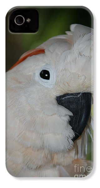 Salmon Crested Cockatoo IPhone 4s Case by Sharon Mau