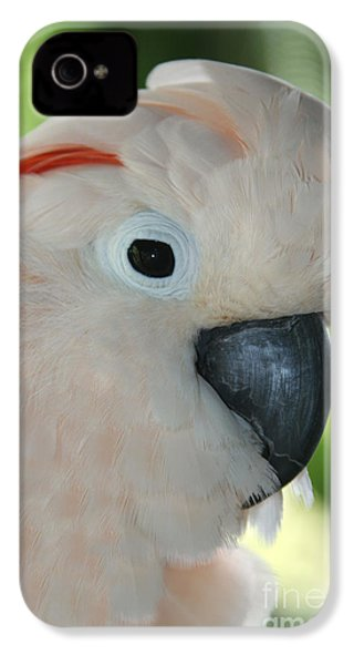 Salmon Crested Moluccan Cockatoo IPhone 4s Case by Sharon Mau