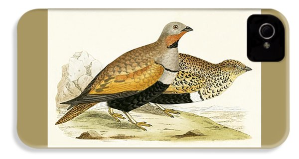 Sand Grouse IPhone 4s Case