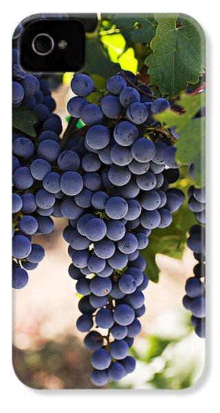 Sauvignon Grapes IPhone 4s Case by Garry Gay