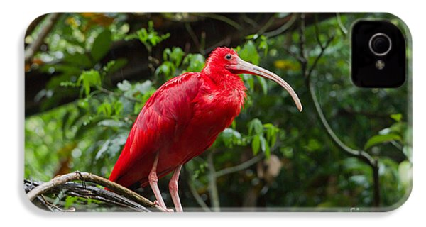 Scarlet Ibis IPhone 4s Case by B.G. Thomson
