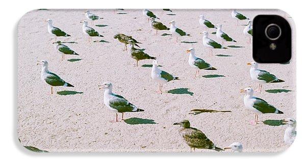 Seagulls  IPhone 4s Case