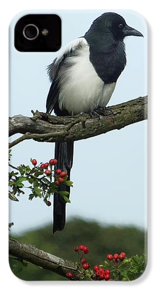 September Magpie IPhone 4s Case by Philip Openshaw
