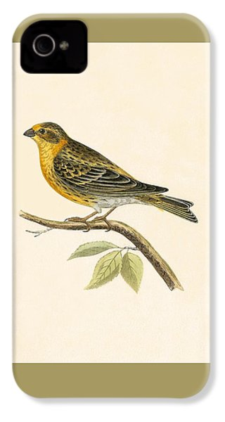 Serin Finch IPhone 4s Case by English School