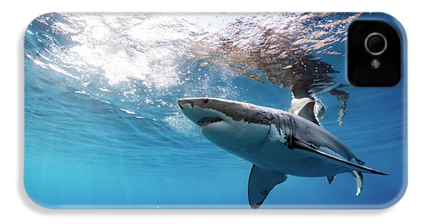 Shark Rays IPhone 4s Case by Shane Linke
