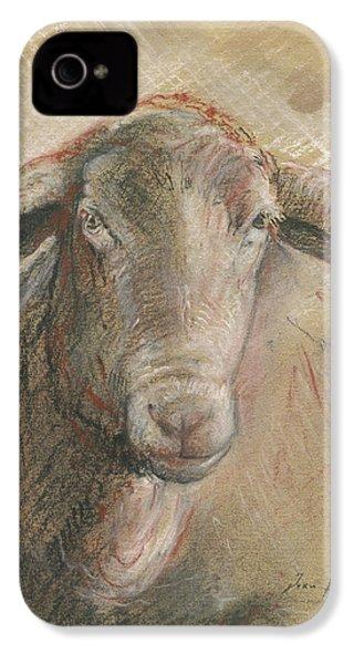 Sheep Head IPhone 4s Case by Juan Bosco