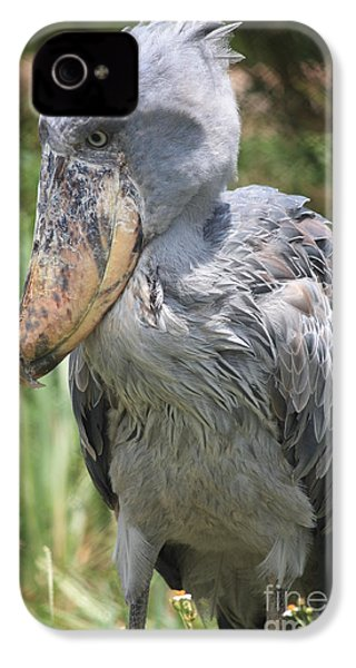 Shoebill Stork IPhone 4s Case by Carol Groenen