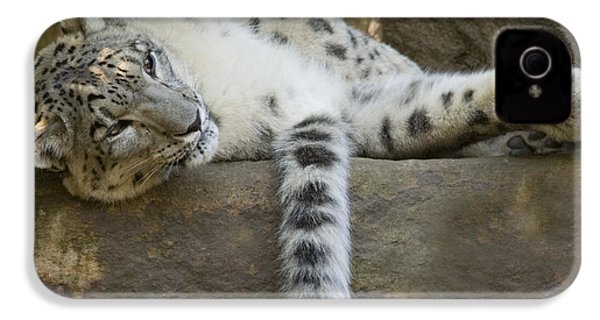 Snow Leopard Nap IPhone 4s Case by Mike  Dawson