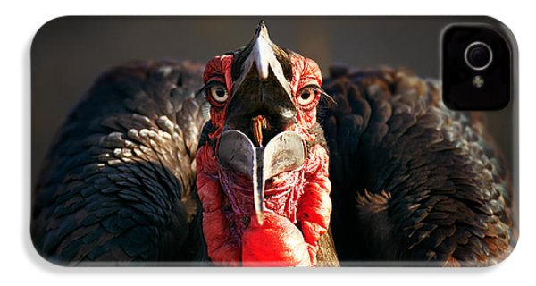 Southern Ground Hornbill Swallowing A Seed IPhone 4s Case
