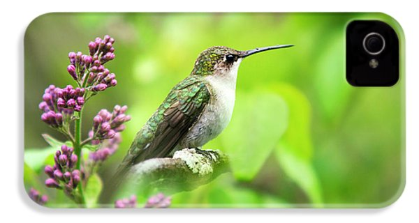Spring Beauty Ruby Throat Hummingbird IPhone 4s Case by Christina Rollo