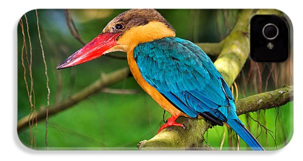 Stork-billed Kingfisher IPhone 4s Case by Louise Heusinkveld