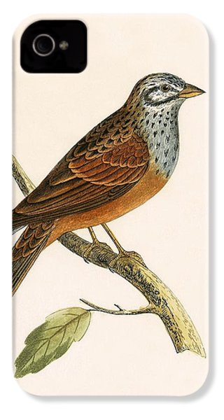 Striolated Bunting IPhone 4s Case by English School