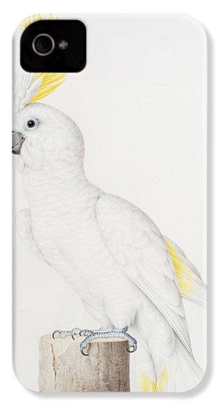 Sulphur Crested Cockatoo IPhone 4s Case by Nicolas Robert