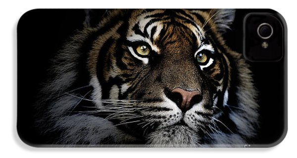 Sumatran Tiger IPhone 4s Case by Avalon Fine Art Photography
