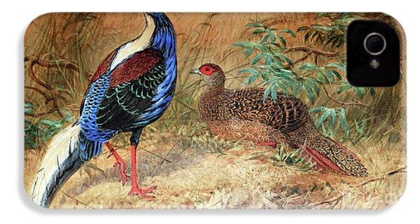 Swinhoe's Pheasant  IPhone 4s Case