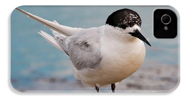 IPhone 4s Case featuring the photograph Tern 1 by Werner Padarin