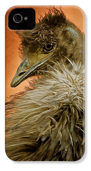 That Shy Come-hither Stare IPhone 4s Case by Lois Bryan