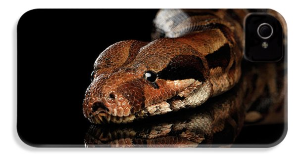 The Boa Constrictors, Isolated On Black Background IPhone 4s Case by Sergey Taran