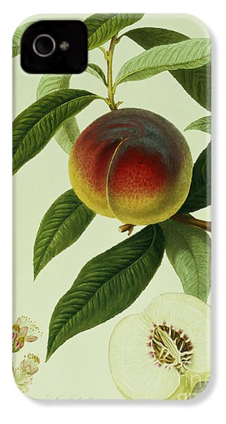 The Galande Peach IPhone 4s Case by William Hooker