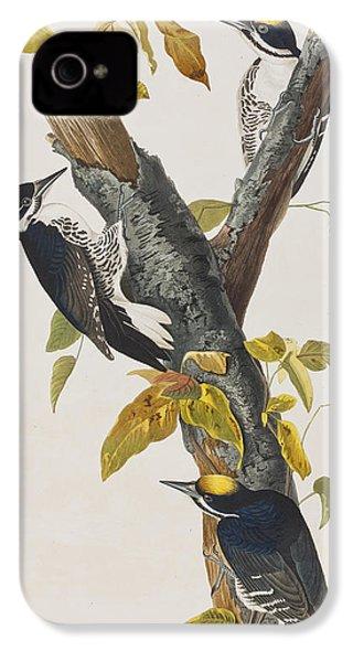 Three Toed Woodpecker IPhone 4s Case