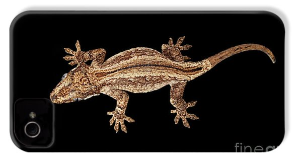 Top View Of Gargoyle Gecko, Rhacodactylus Auriculatus Staring Isolated On Black Background. Native T IPhone 4s Case by Sergey Taran