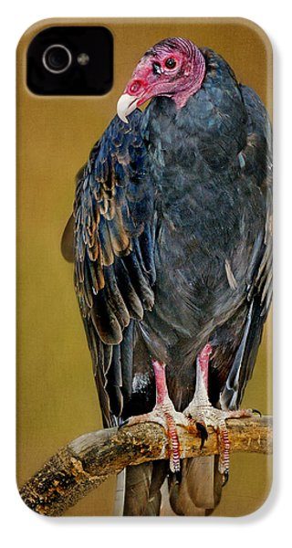 Turkey Vulture IPhone 4s Case by Nikolyn McDonald