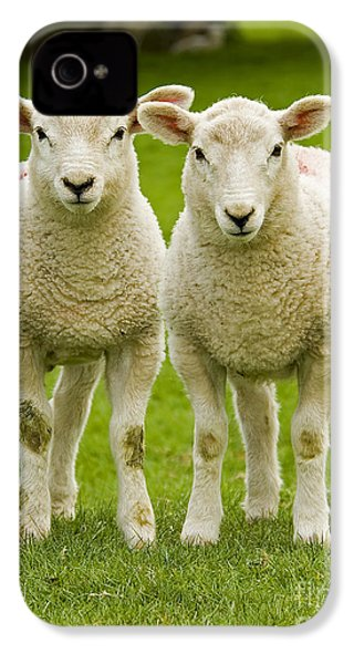 Twin Lambs IPhone 4s Case by Meirion Matthias