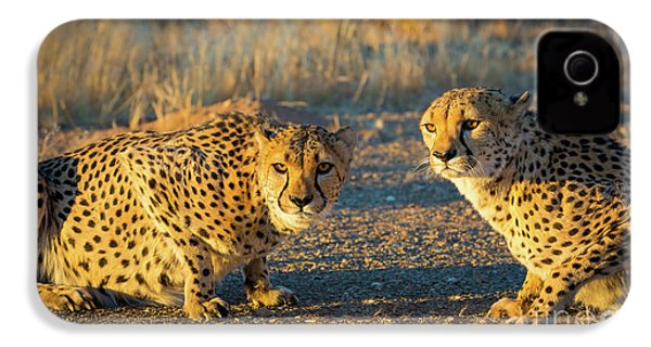 Two Cheetahs IPhone 4s Case by Inge Johnsson