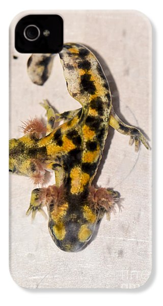 Two-headed Near Eastern Fire Salamande IPhone 4s Case by Shay Levy