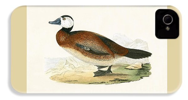 White Headed Duck IPhone 4s Case by English School