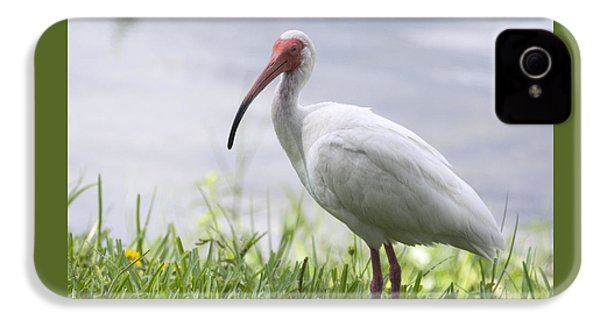 White Ibis  IPhone 4s Case by Saija  Lehtonen