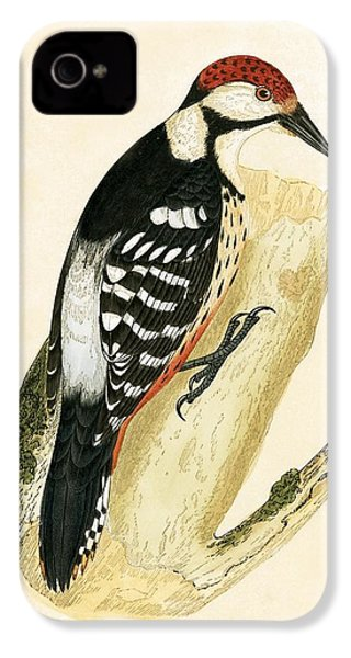 White Rumped Woodpecker IPhone 4s Case by English School
