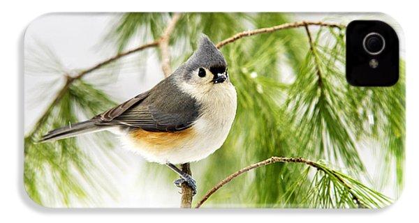 Winter Pine Bird IPhone 4s Case