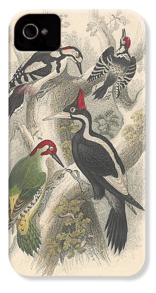 Woodpeckers IPhone 4s Case by Dreyer Wildlife Print Collections