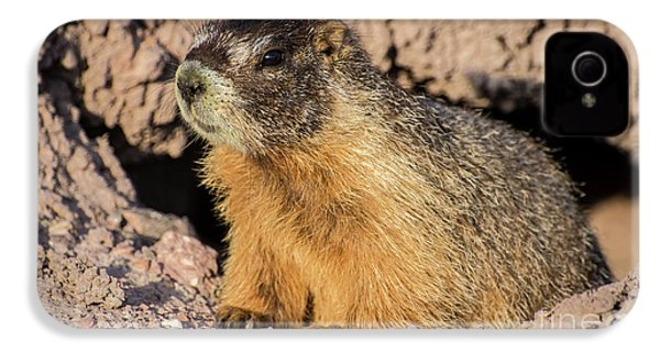 Yellow-bellied Marmot - Capitol Reef National Park IPhone 4s Case by Gary Whitton